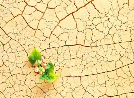 Growing food in Times of Uncertainty