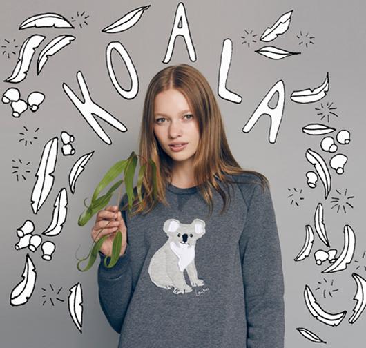 2016- Koala