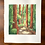 Thumbnail: A Walk In Muir Woods