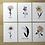 Thumbnail: Birth Flower Prints