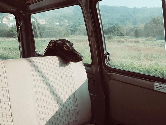stockvault-dog187497.jpg