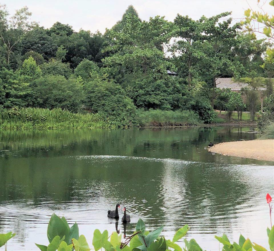 Visit the Eco-Lake at Singapore Botanic Gardens
