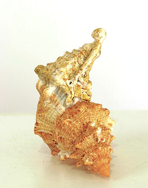 Chimère XV, 14x14x9 cm.JPG