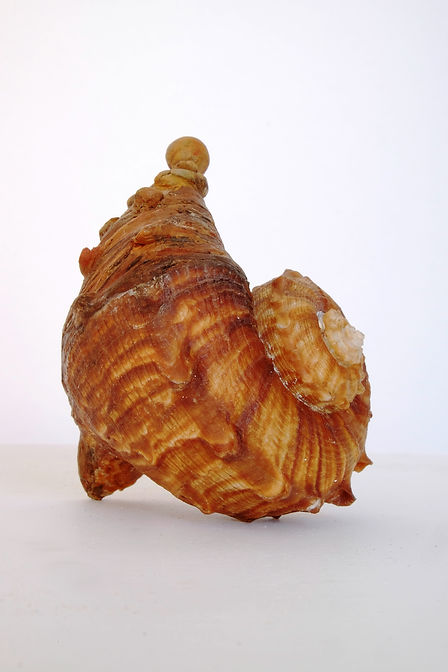 Chimère marron 10x10x12.JPG