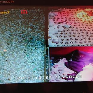 'COLA' - kennel 3 on Camera