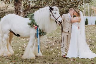 South Eden Plantation - Horses