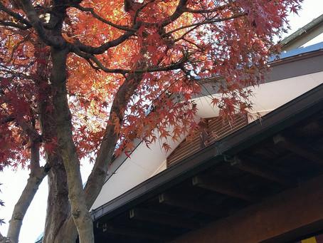 秋色紅葉に初氷。寒い季節となりました。