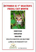FERAL CAT MONTH donate.JPG