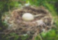 Egg in nest.jpg