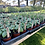 Thumbnail: Home Garden Seedling Bundle