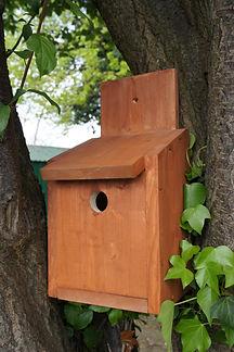 Bird Box_1.JPG