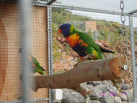 Amazon's Park