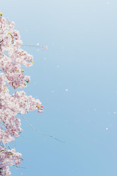 masaaki-komori-14cHwhRKJh8-unsplash_edit