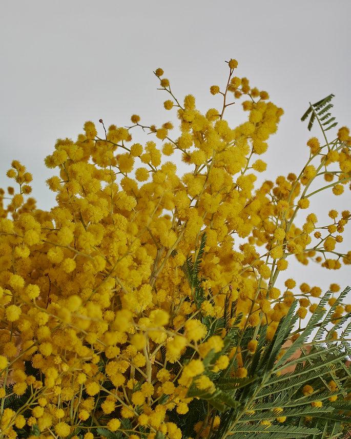 Bloom7.jpg