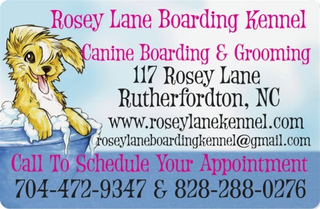 Papillon Puppies Rosey Lane Boarding Dog Grooming Rutherfordton Nc