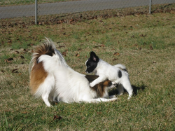 large_Princess and pup playing.png
