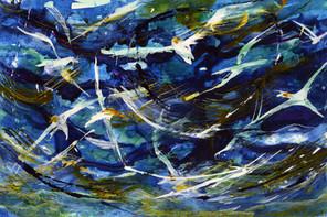 Gannets Blue