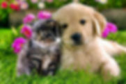 cat & Dog.jpg