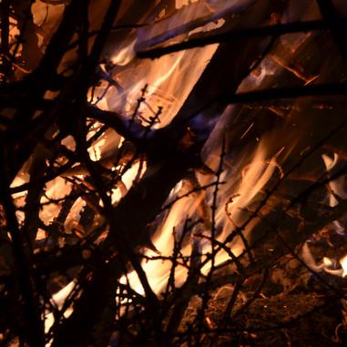 On a brûlé les sapins