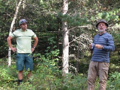 Le Lizieux, gestion forestière et projet d'aménagement