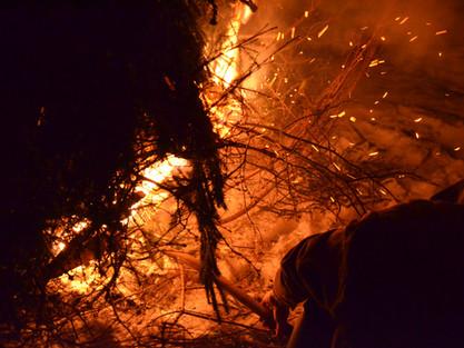 Brûlons les sapins