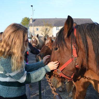 Foire aux chevaux à Fay-sur-Lignon