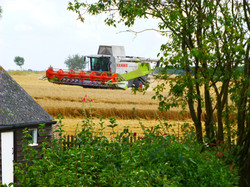Harvest time in Sutton