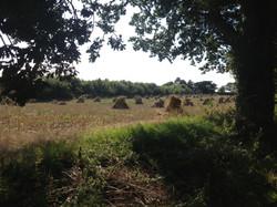 2015 Harvest, Sutton