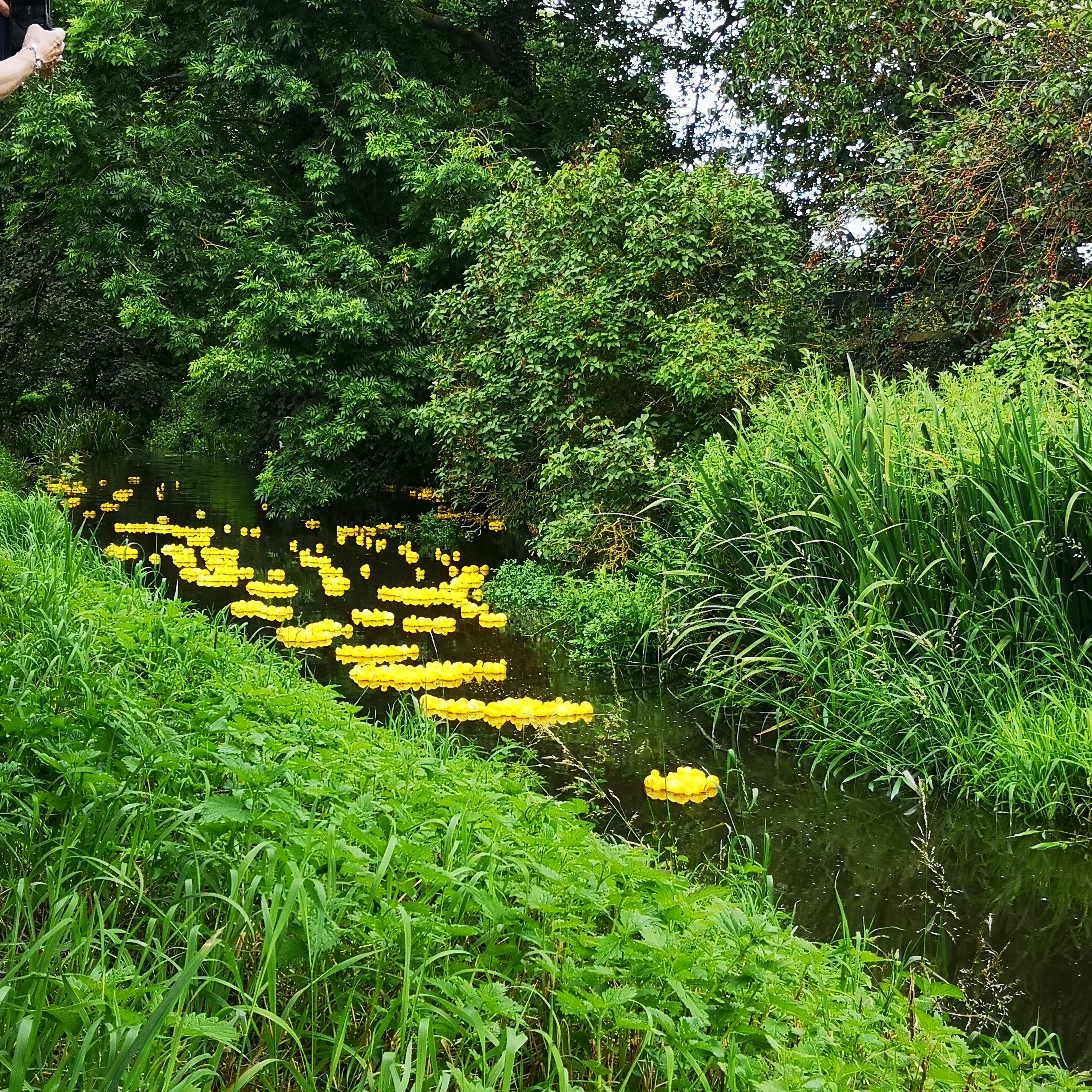 June 2019 Duck Race