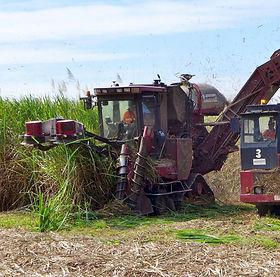 Sugar_cane_harvesting,_Craiglie,_2015_(03).JPG