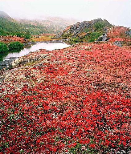 332 Valdez Tundra#2.jpg