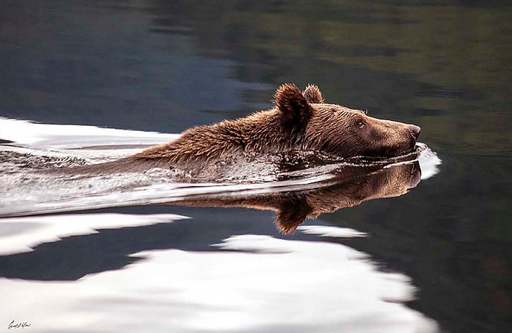 54 Alaska Brownie.jpg