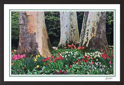 Apr 30-19 3Trees.jpg