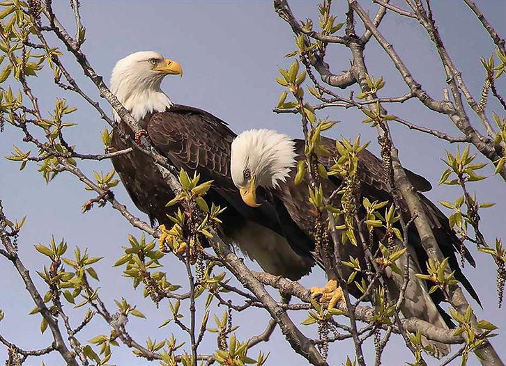491 Eagles Valdez.jpg