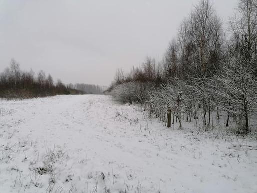 Meikesbossen in de sneeuw
