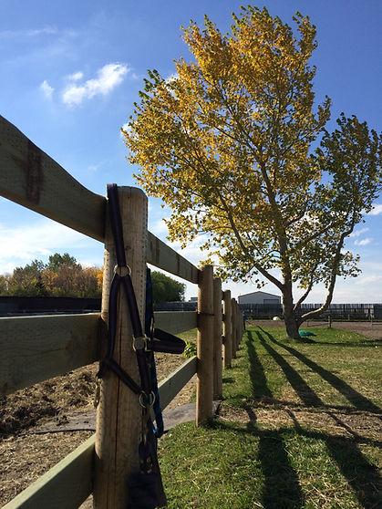 Country Hills Equestrian Centre Calgary Alberta