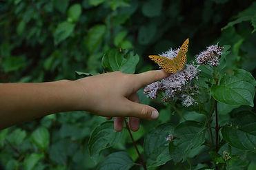 papillon et Louca.jpg