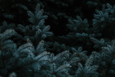 Evergreen Landscape.jpg