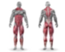 Muscles that are trained during the deadlift exercise infographic