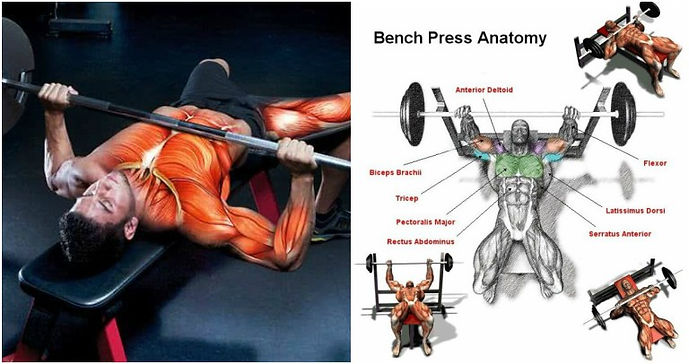 Barbell bench press demonstration and muscles being trained infographic