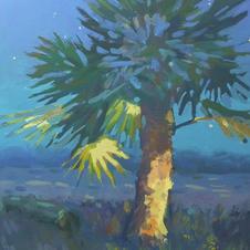Evening Palm.jpg