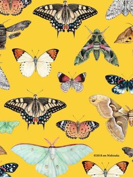 成虫柄パターン