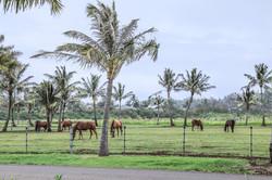 Gorgeous Ranch Views