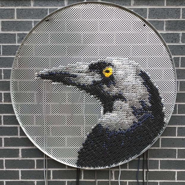 Deceitful Currawong- aka Magpie