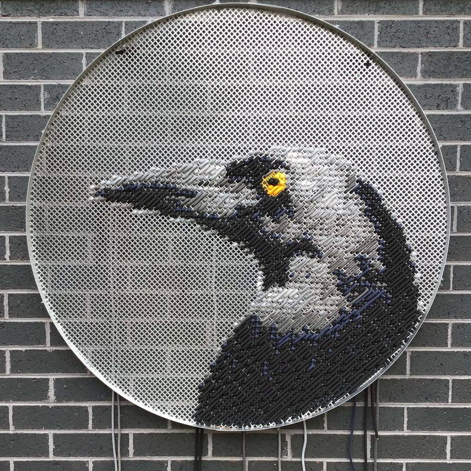 Deceitful Currawong aka Magpie