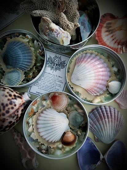 Merveilles de la Mer