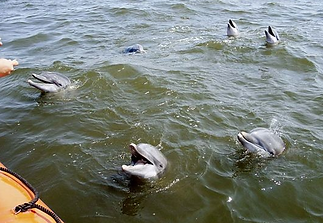 marine-camp-dolphins.PNG