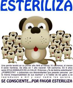 CAMPAÑAESTERILIZACION3.jpg