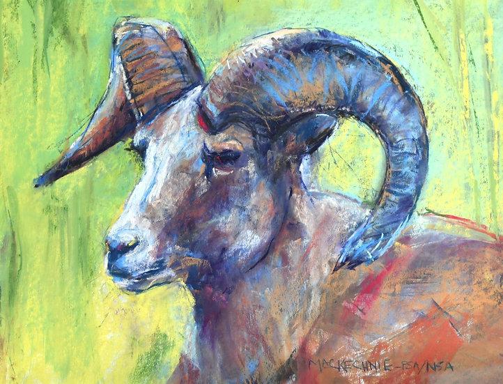 pastel Joe Mac Kenchie Rocky Mountain Ram