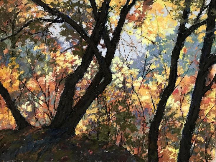 pastel dotty hawthorne dazzled by fall